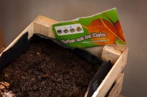 Mini-Garten aus der Kiste für die Fensterbank
