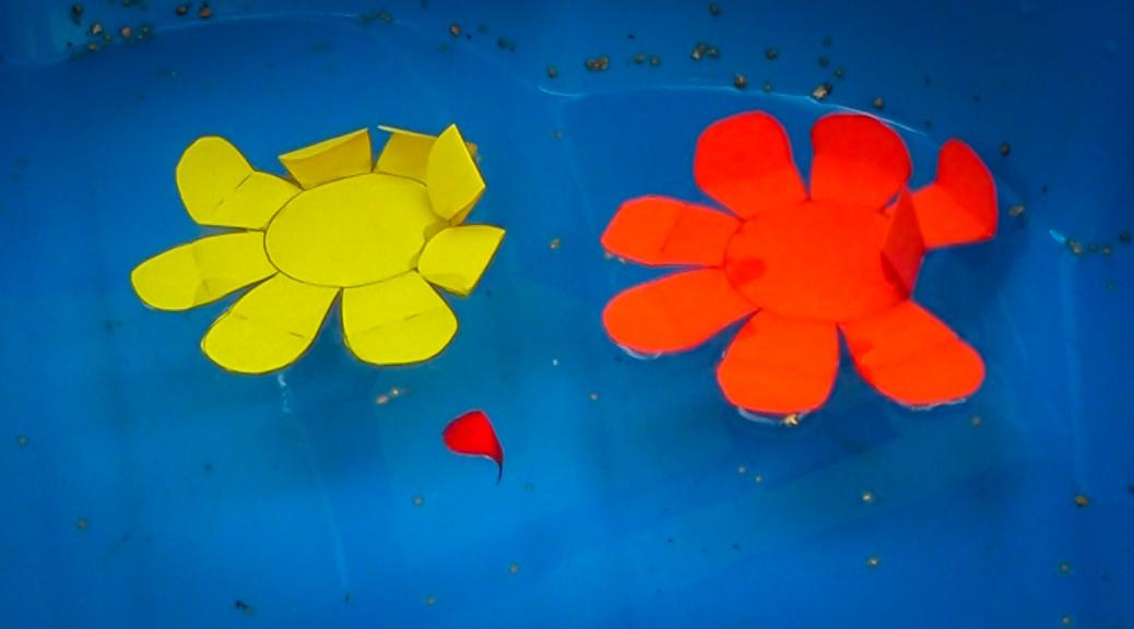 Papierseerose, die im Wasser aufblüht